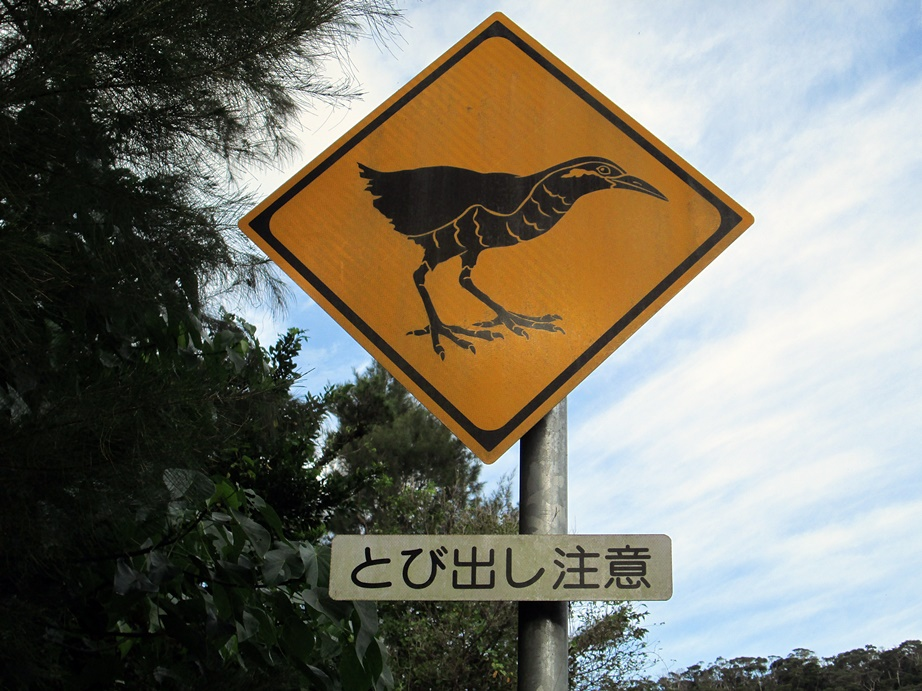 沖縄ツアー・その4(クライミング編)_f0050226_10323829.jpg