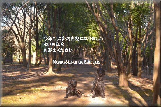 f0363141_17564638.jpg