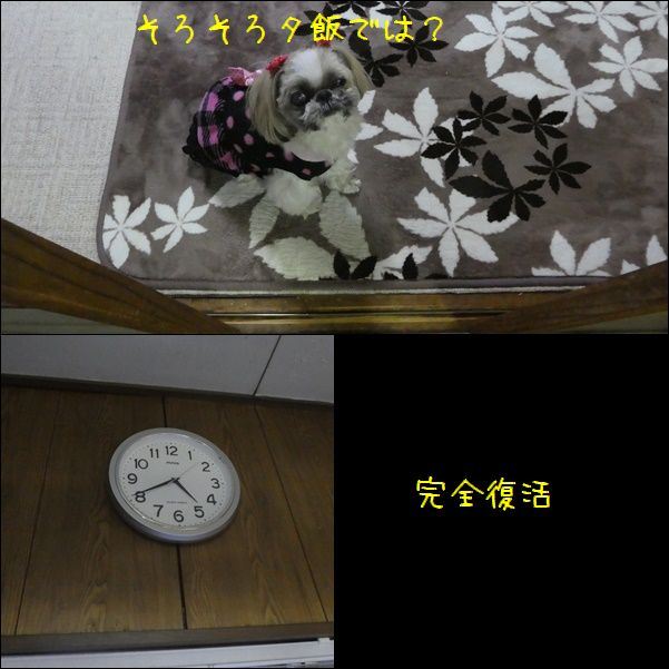 e0234881_2046518.jpg