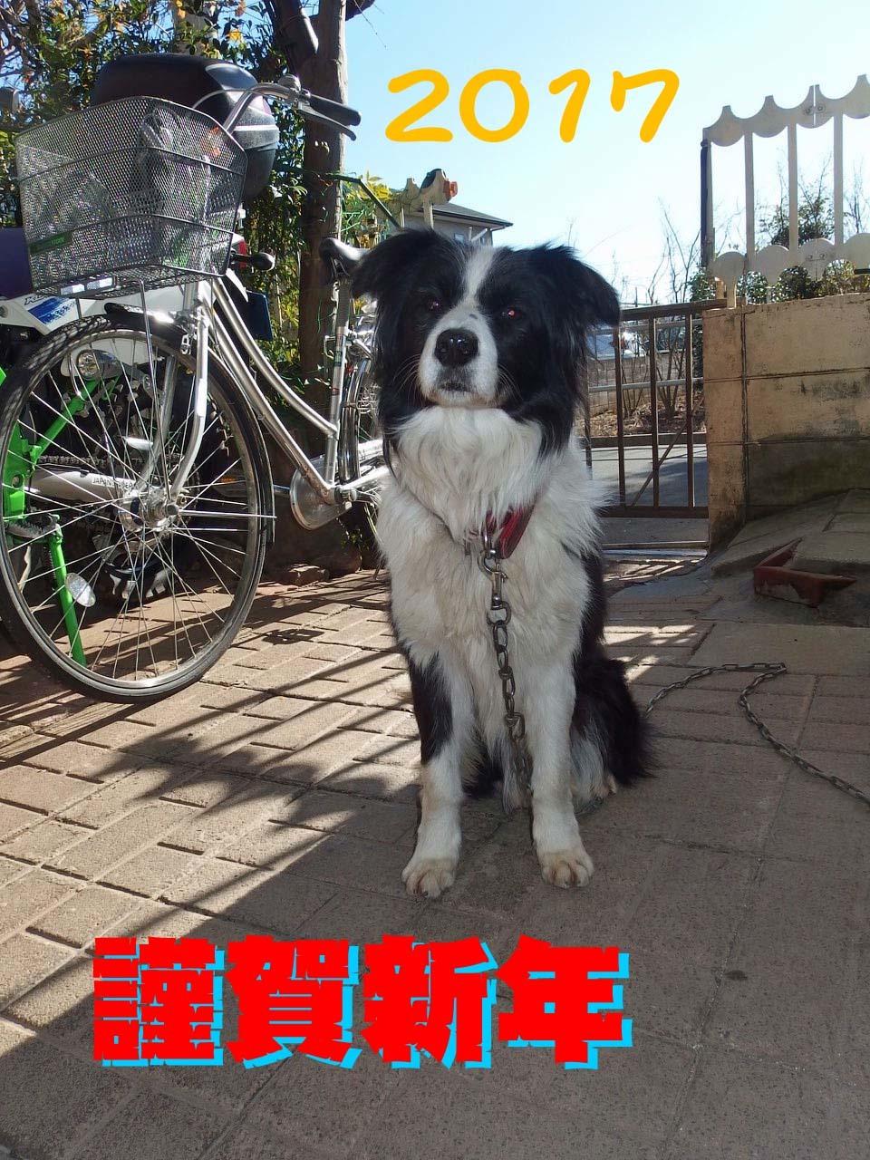 【犬】謹賀新年!_f0141609_13170204.jpg