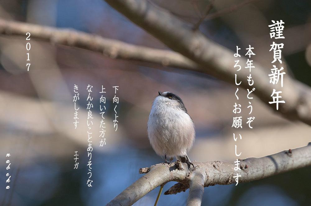 2017/01/01_b0036743_17363036.jpg