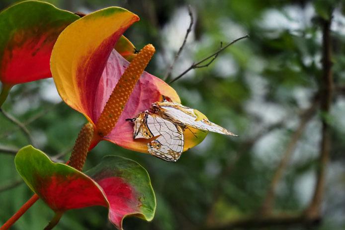 イシガキチョウと南国の赤い花_d0149245_21301379.jpg