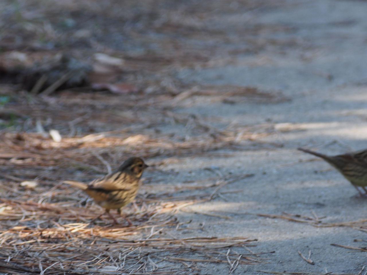 酉ではありませんが 鳥の写真からです_b0021375_11384924.jpg