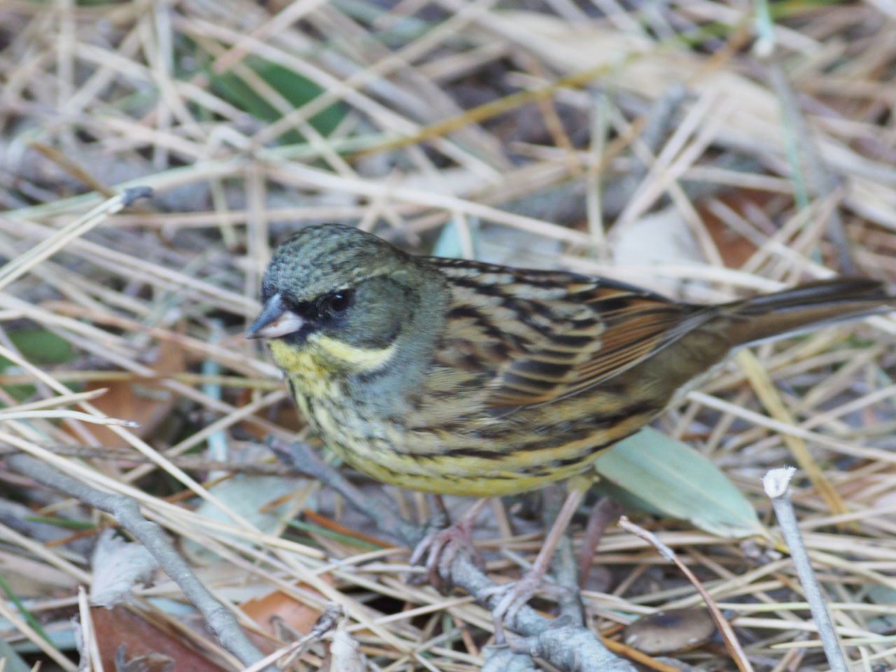 酉ではありませんが 鳥の写真からです_b0021375_11390093.jpg