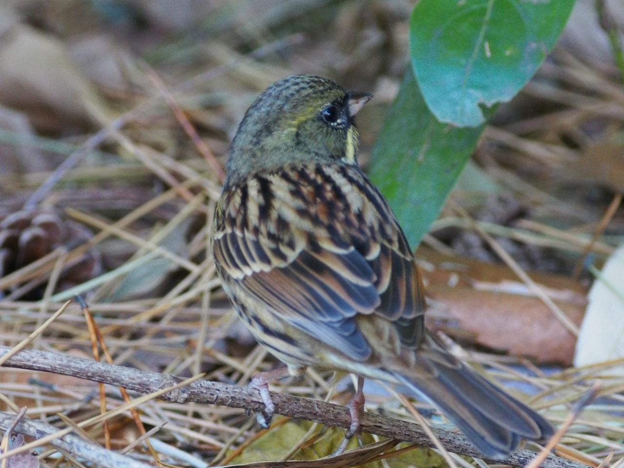 酉ではありませんが 鳥の写真からです_b0021375_11392322.jpg