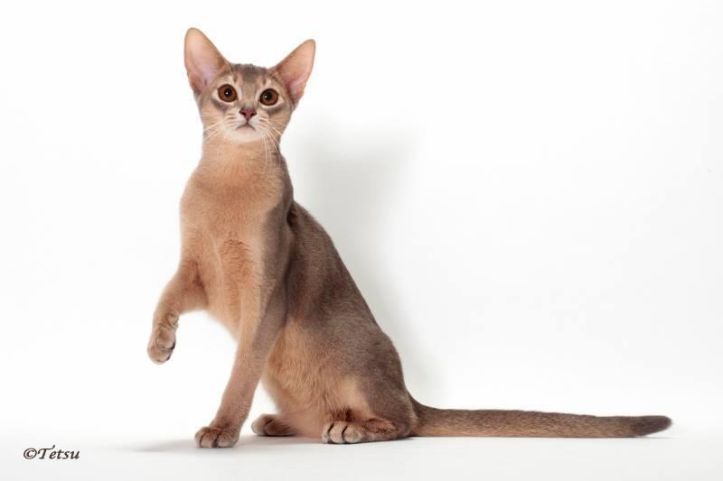 アビシニアン子猫 フォーン姉妹 12/6生まれ_e0033609_19064533.jpg