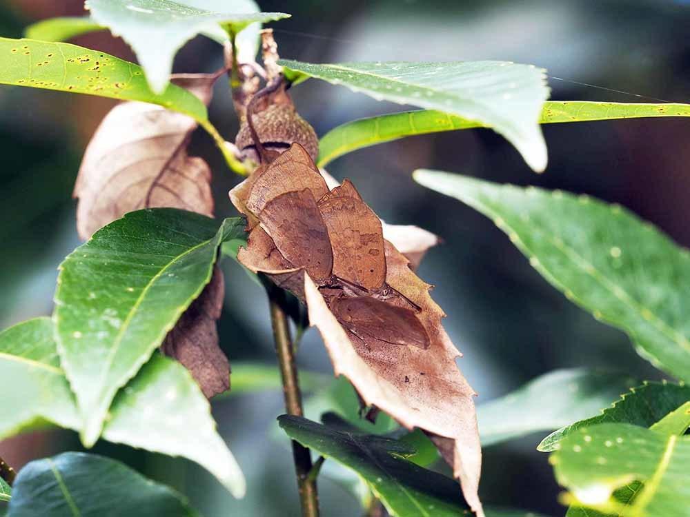 越冬昆虫探しの日_f0324026_19502991.jpg