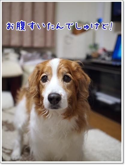 d0013149_00380596.jpg