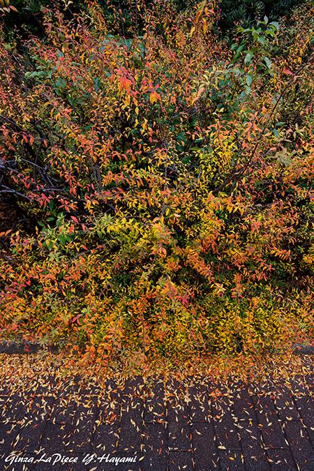 風景の写真 緑黄赤の小さい葉_b0133053_00162411.jpg