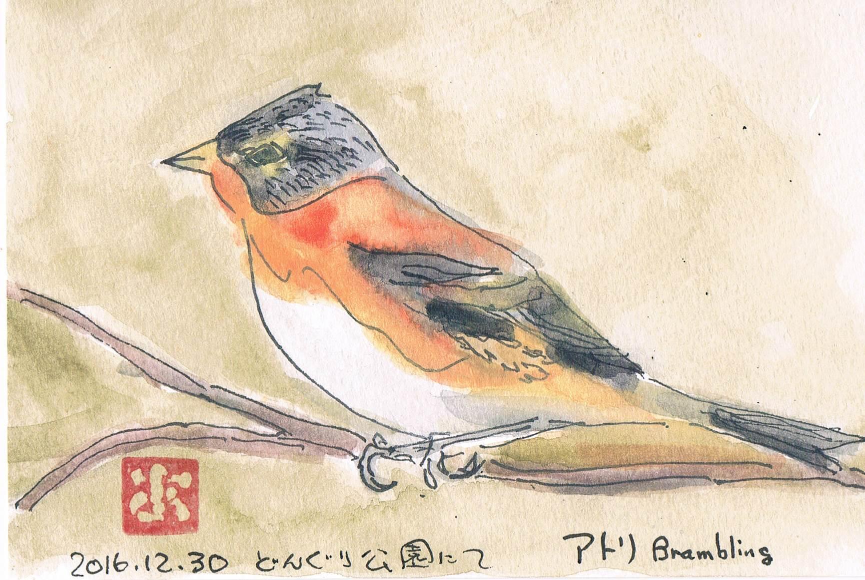 12月31日に見た鳥はアトリでした_e0232277_14144873.jpg