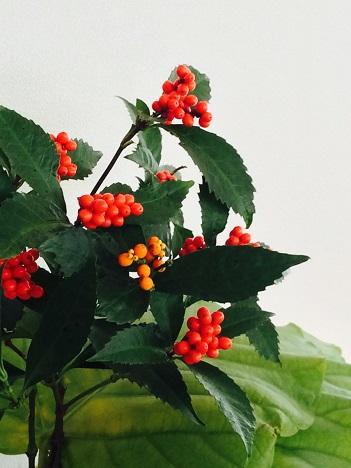 仕事始めー小さな花器+1月の枝物_f0206741_23145643.jpg