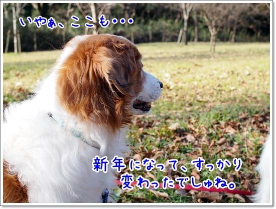 d0013149_23275195.jpg