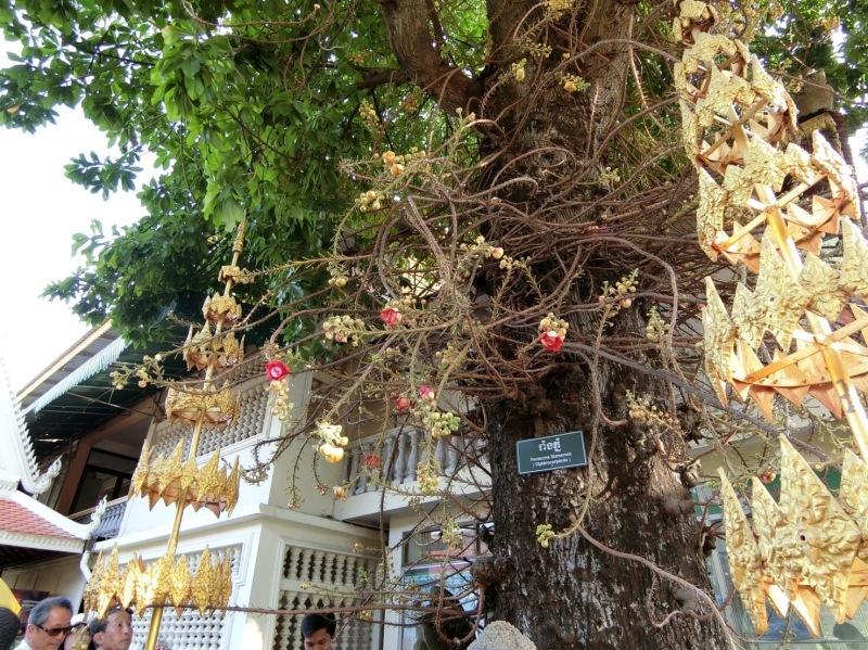 カンボジアへ_c0366777_23174326.jpg