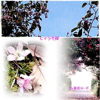c0041997_175148100.jpg