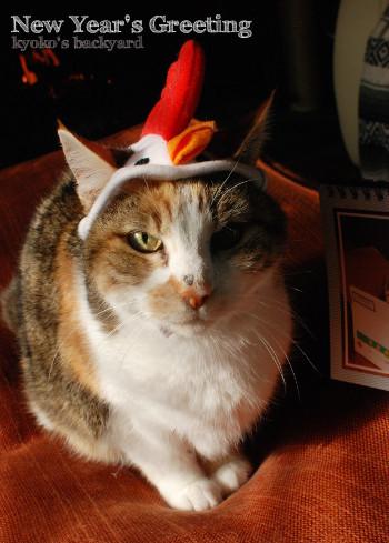 Sandyからの新年のご挨拶 (動物・ペット部門)_b0253205_05471518.jpg