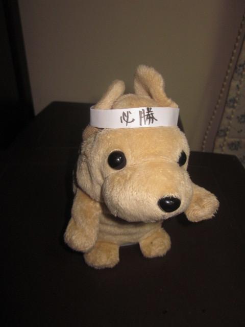 今年の応援犬_f0024310_17270591.jpg