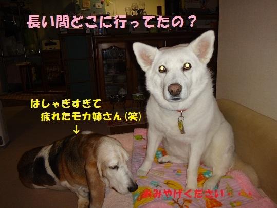 f0121712_06073923.jpg