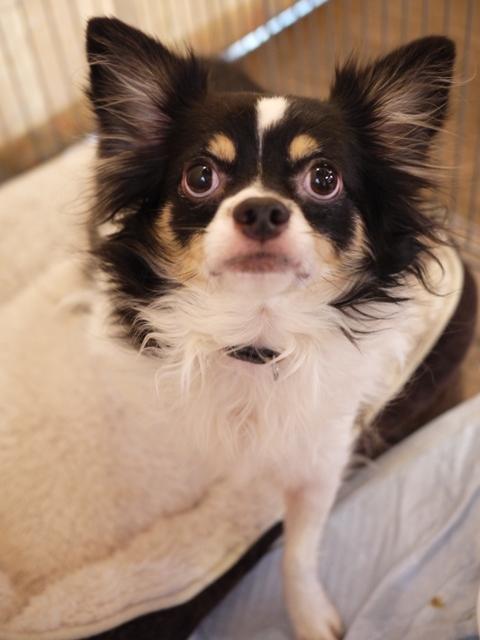 犬のお留守番 マロンくん編。_a0143140_22461011.jpg