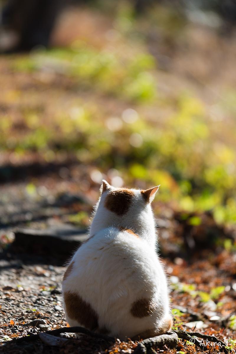 〜岩合光昭に挑戦〜 京都ネコ歩き -14-_f0152550_18224371.jpg