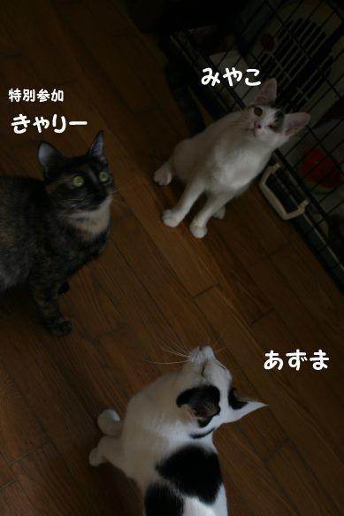 わんぱく盛りの東京兄弟_f0242002_00201489.jpg