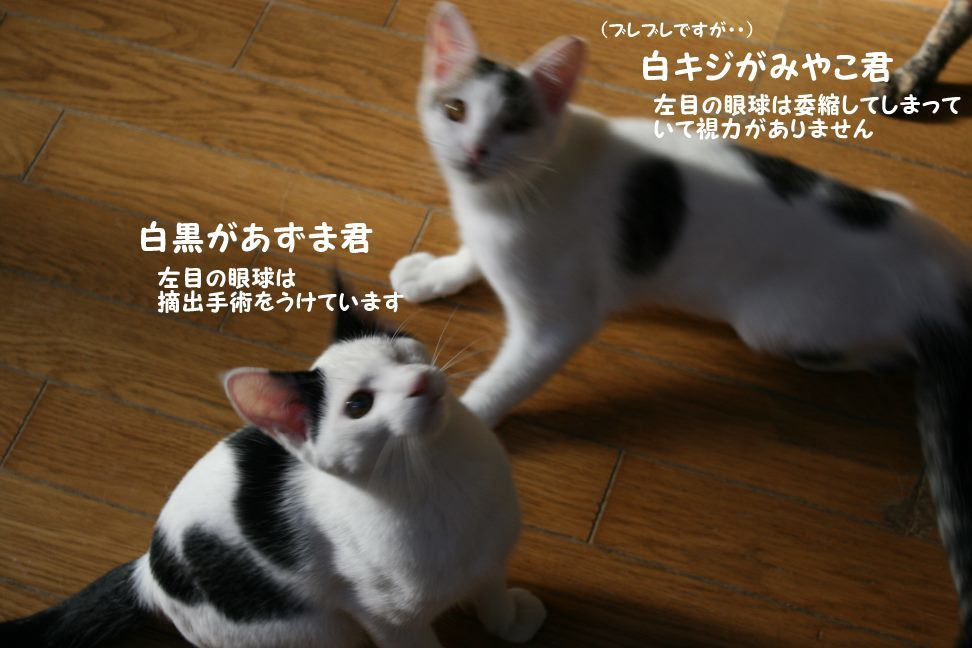 わんぱく盛りの東京兄弟_f0242002_00323486.jpg