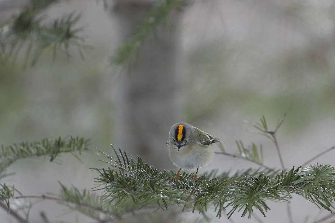 鳥も人も・・・・・・・_c0295707_17561167.jpg