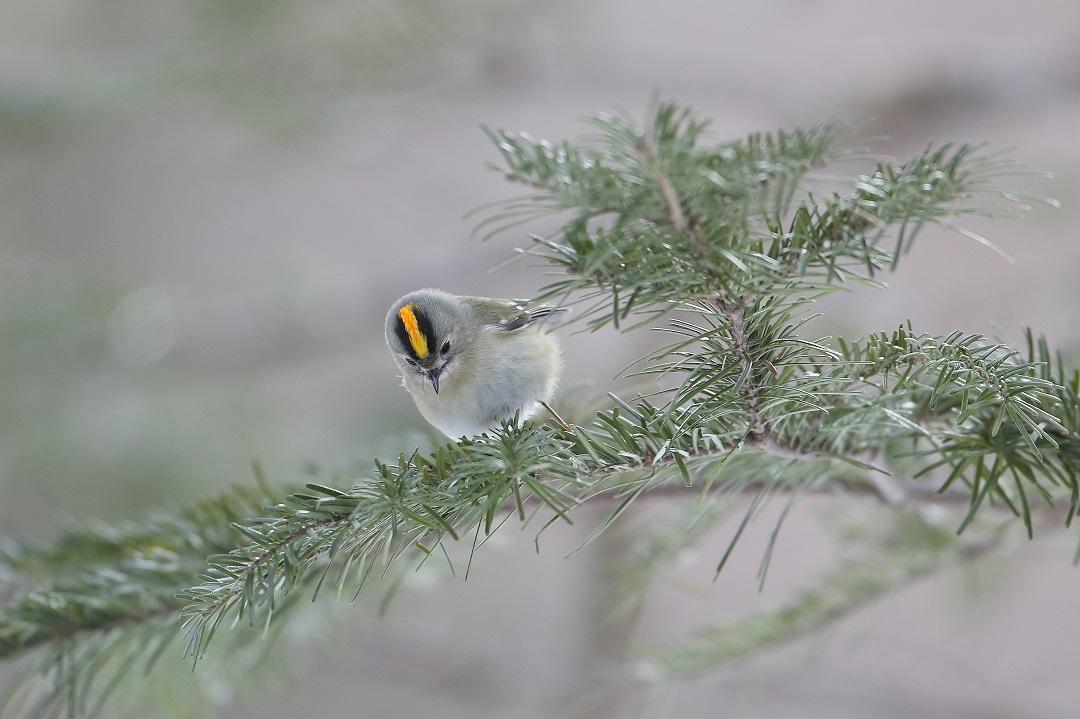 鳥も人も・・・・・・・_c0295707_17562243.jpg