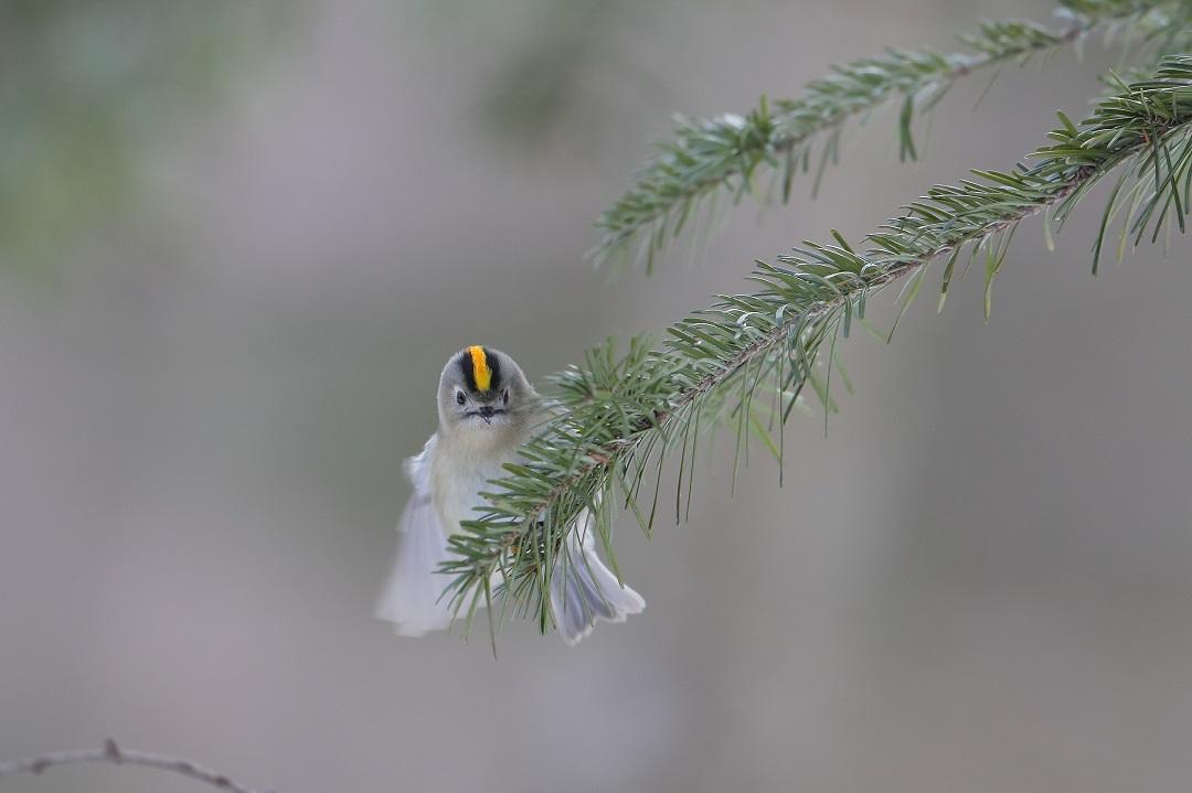 鳥も人も・・・・・・・_c0295707_17562964.jpg