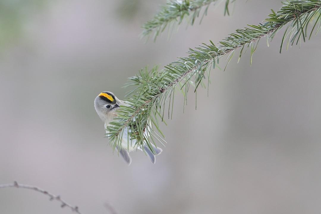 鳥も人も・・・・・・・_c0295707_17565348.jpg