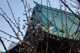 謹んで新春のお慶びを申し上げます☆_c0200917_02535259.jpg