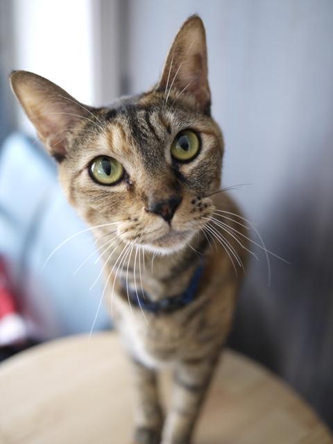 猫のお留守番 KEEちゃん編。_a0143140_2136153.jpg