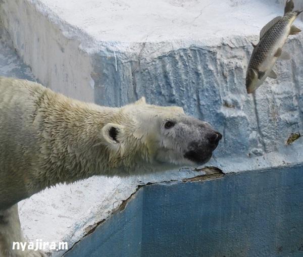 今日の動物園(追記あり)_f0002743_1621350.jpg