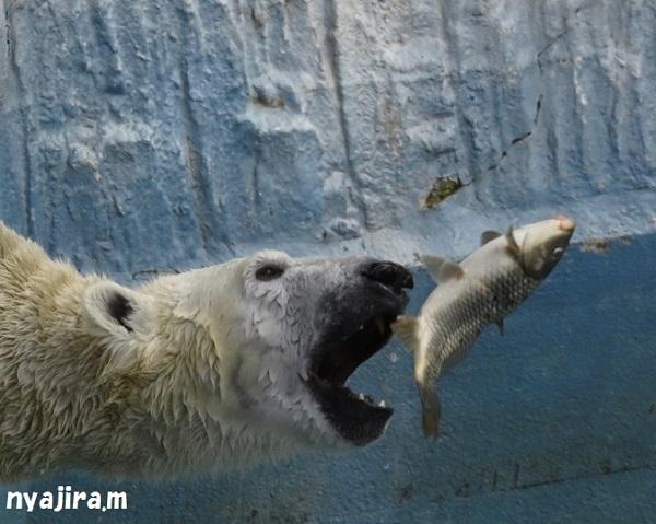 今日の動物園(追記あり)_f0002743_162283.jpg