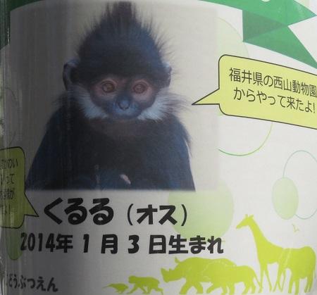 今日の動物園(追記あり)_f0002743_20351681.jpg