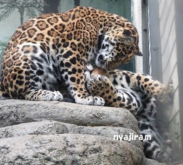 今日の動物園(追記あり)_f0002743_20404612.jpg