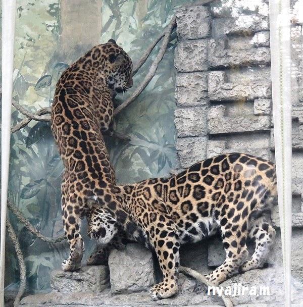 今日の動物園(追記あり)_f0002743_20415233.jpg
