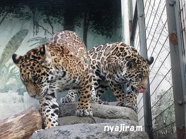 今日の動物園(追記あり)_f0002743_20441390.jpg