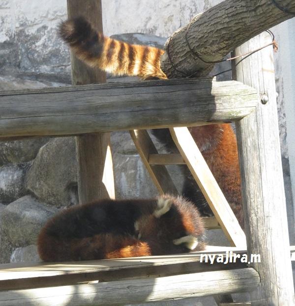 今日の動物園(追記あり)_f0002743_20534967.jpg