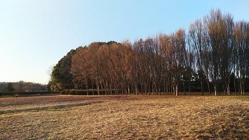 世界中の土の色をならべてみたい_d0244370_06392376.jpg