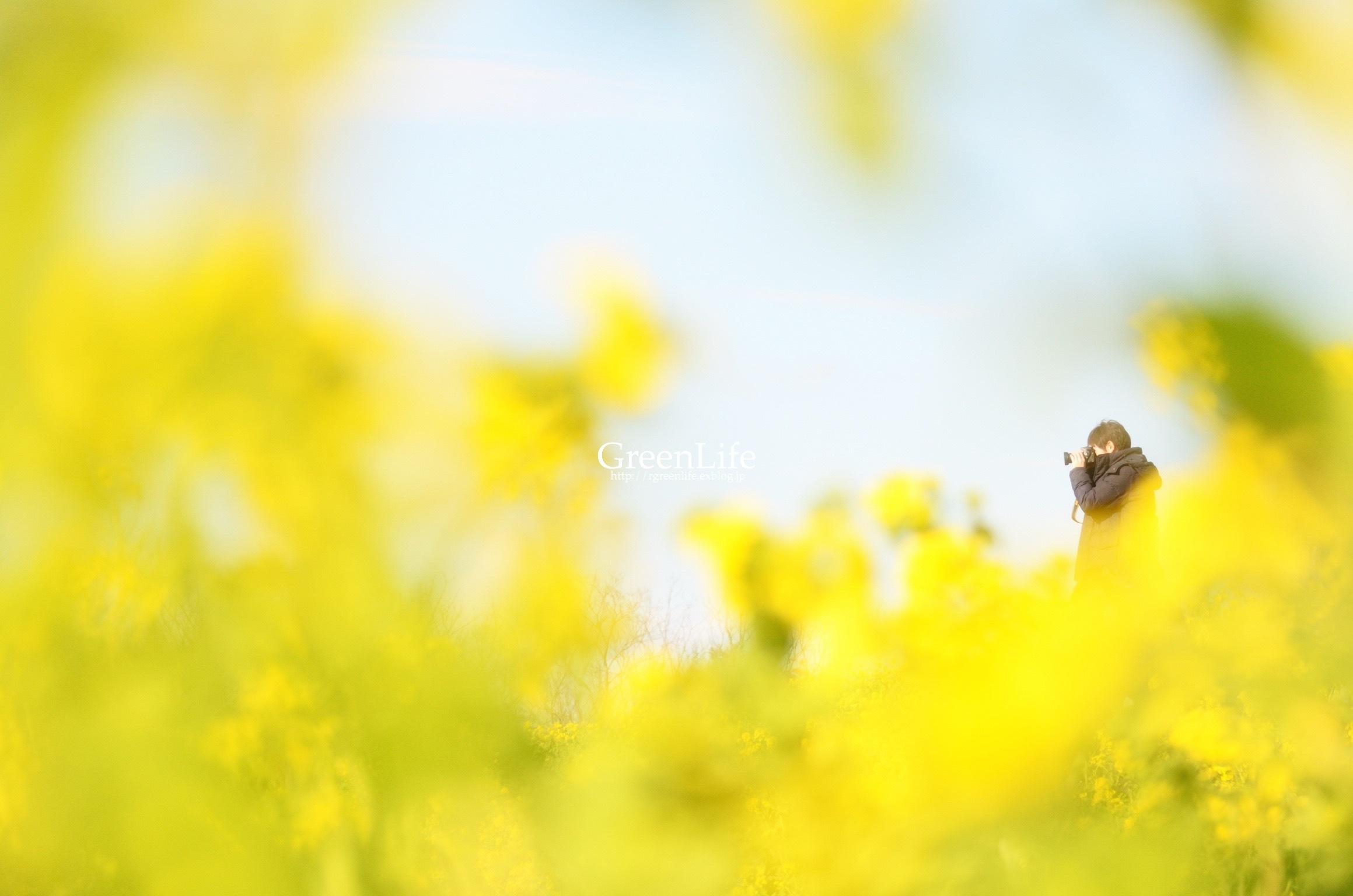 菜の花と富士_f0321522_11584738.jpg