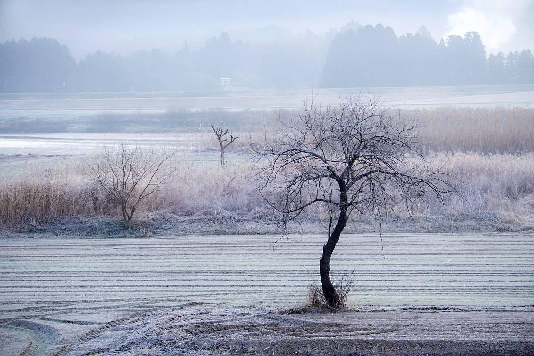 凍てつく中で・・・・_e0271864_73615100.jpg