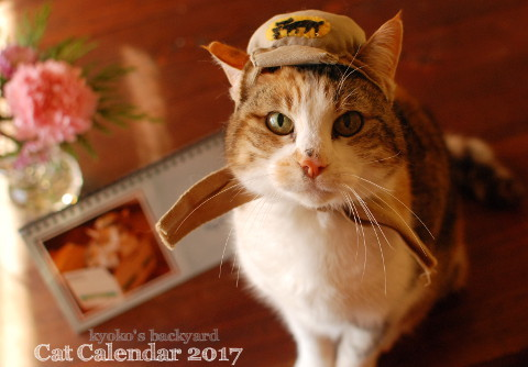 うち猫カレンダー2017(動物・ペット部門)_b0253205_09493921.jpg