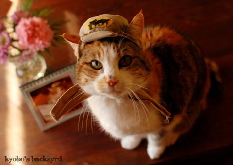 うち猫カレンダー2017(動物・ペット部門)_b0253205_09495170.jpg