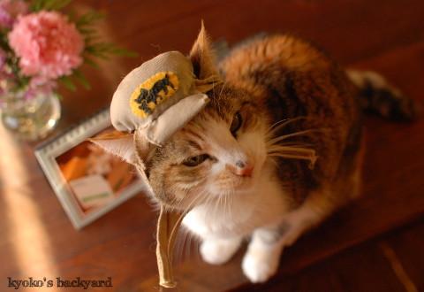 うち猫カレンダー2017(動物・ペット部門)_b0253205_09500380.jpg