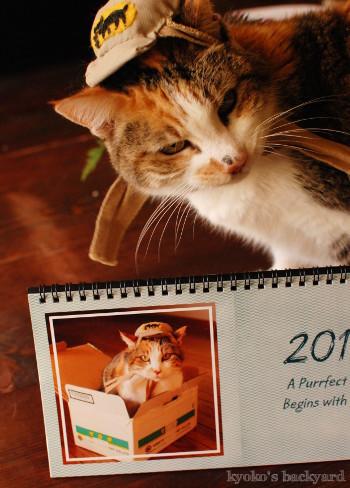 うち猫カレンダー2017(動物・ペット部門)_b0253205_09501914.jpg