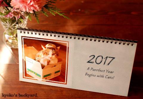 うち猫カレンダー2017(動物・ペット部門)_b0253205_09503124.jpg