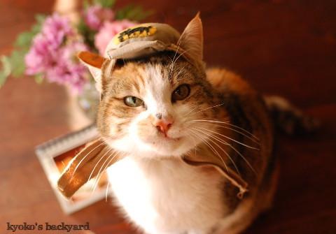うち猫カレンダー2017(動物・ペット部門)_b0253205_09504270.jpg