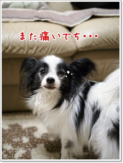 d0013149_00425421.jpg