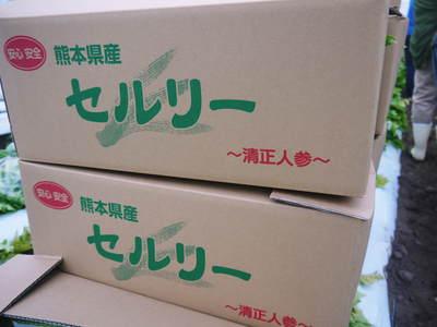 熊本セロリ『清正人参』 令和元年度は完売しました!今年度もたくさんのご注文ありがとうございました。_a0254656_18331972.jpg