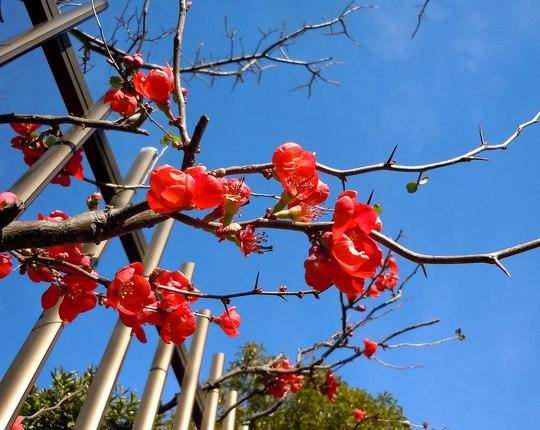 路傍の花、樹々の鳥(139) ~ もう臘梅が・・ ~ _b0102572_1321161.jpg
